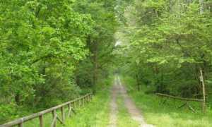 bosco1 interno