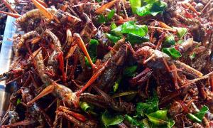 piatto insetti cibo