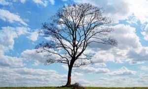 tree 164915 960 720